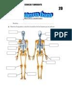 Observa El Esqueleto y Escribe El Nombre de Los Huesos Que Se Indican