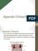Aparato Urinario1