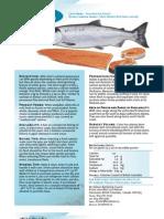 Coho Salmon Set