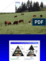 Beef Forage and Grazing Opportunities