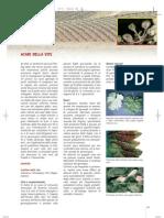 076acari_eriofidi_e_tetracnidi.pdf