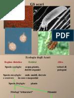acari_sintesi.pdf