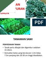 Tanaman sayur daun