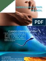 Desarrollo Prenatal y El Recien Nacido.