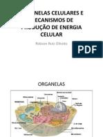 3 - INTRODUÇÃO A BIOLOGIA - ORGANELAS CELULARES E MECANISMOS DE PRODUÇÃO DE ENERGIA CELULAR
