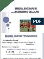 ENERGÍA, ENZIMAS & METABOLISMO CELULAR