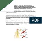 enfermedades neurogenerativas