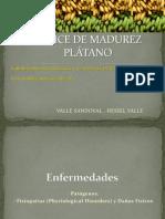 Indice de Madurez Platano .Hessel Valle (3)