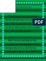 Tropical Rainforest Destiny