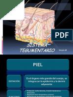 Sistema Tegumentario02