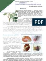...AMENDOIM - Principais doenças, manejo integrado e recomendações de controle...pdf