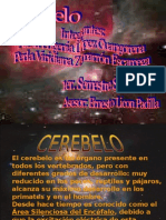 Cerebelo1