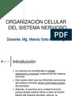 Neurona y Glia