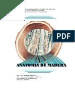 Anatomia de Madera