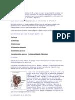 El Sistema Digestivo (v.seguel)