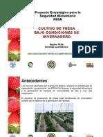 Cultivo Fresa Santiago Juxtlahuaca