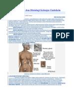 Aspek Anatomi Dan Histologi Kelenjar Endokrin