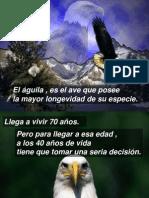 El Aguila Blanca