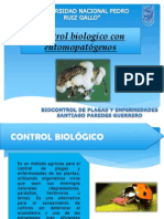 Control Biologico Entomopatogenos