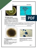 Atlas de Hongos (2) (1).docx
