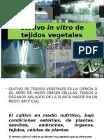 Cultivo de Tejidos Vegetales. Generalidades