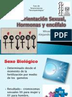 Orientación Sexual, Hormonas y encéfalo2