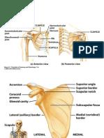 L Minas Anatomia Esqueleto Apendicular