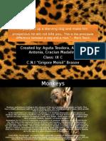 Animals Project