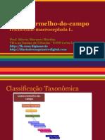 Cravo Vermelho Do Campo PDF