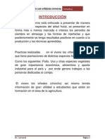 Informe de Chincha Palta Imprimir Mari