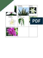 Flores Nacionales Centroamerica