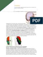 NEURALGIA DO TRIGÊMEO.docx