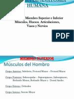 Anatomia Humanas MS y MI Corregida.ppt 2