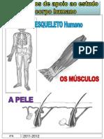 o Corpo Humano