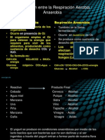 1Comparación entre la Respiración Aerobia - Anaerobia (3).pptx