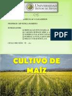 Costos Agricolas - Cultivo de Maiz