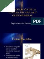 ARTICULACIÓN DE LA CINTURA ESCAPULAR Y GLENOHUMERAL.