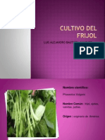 cultivodefrijol-120917194156-phpapp02