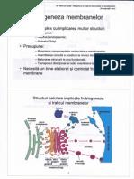 Biogeneza Si Traficul Intracelular Al Membranelor Powerpoint