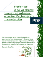 Plant As