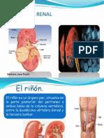 CA Renal y Hepatico Primarios