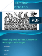 intestinodelgado-100519163245-phpapp02