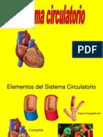 Sistema Circulatorio y Respiratorio