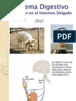 Clase 10 Digestion Intestinal