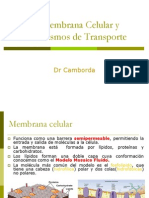 MC Transporte