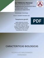 Toxoplasma Gondii Completo.pptx