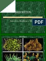 Bryophyta 2