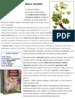 Cretisoara - Material Farmacognozie