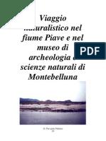 Viaggio Naturalistico Nel Fiume Piave e Nel Museo Di Archeologia e Scienze Naturali Di Montebelluna