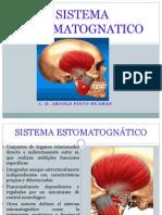 Sistema Estomatognatico CLASE VI